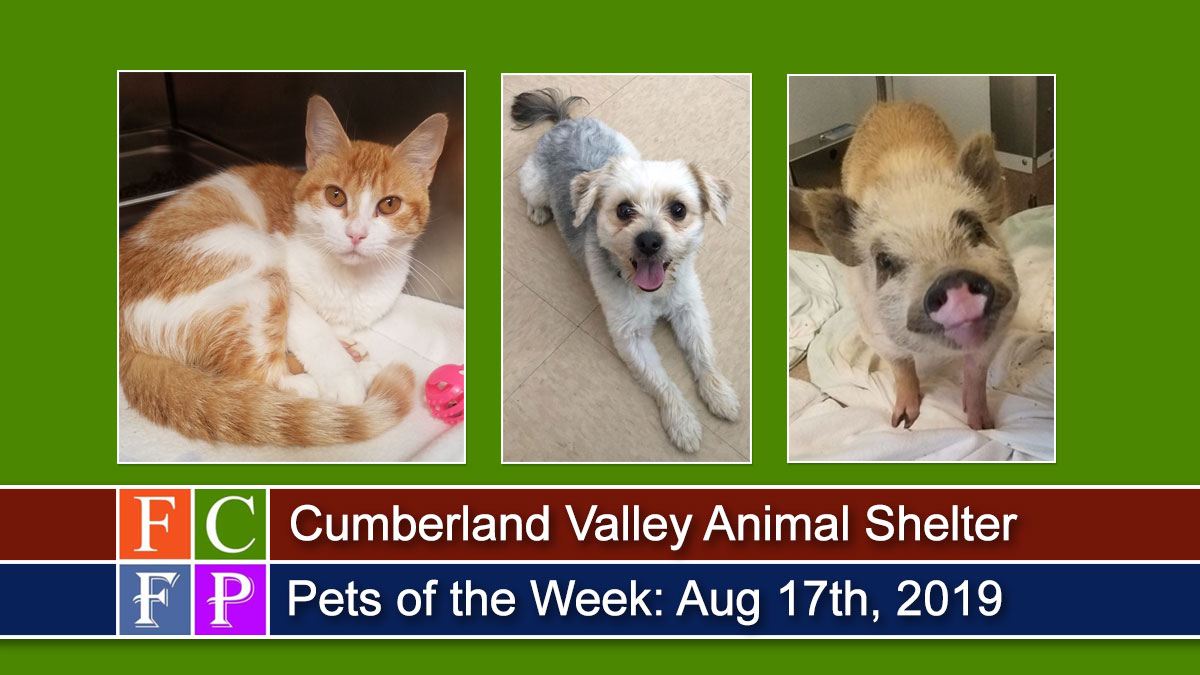 Cumberland Valley Animal Shelter Pets of the Week