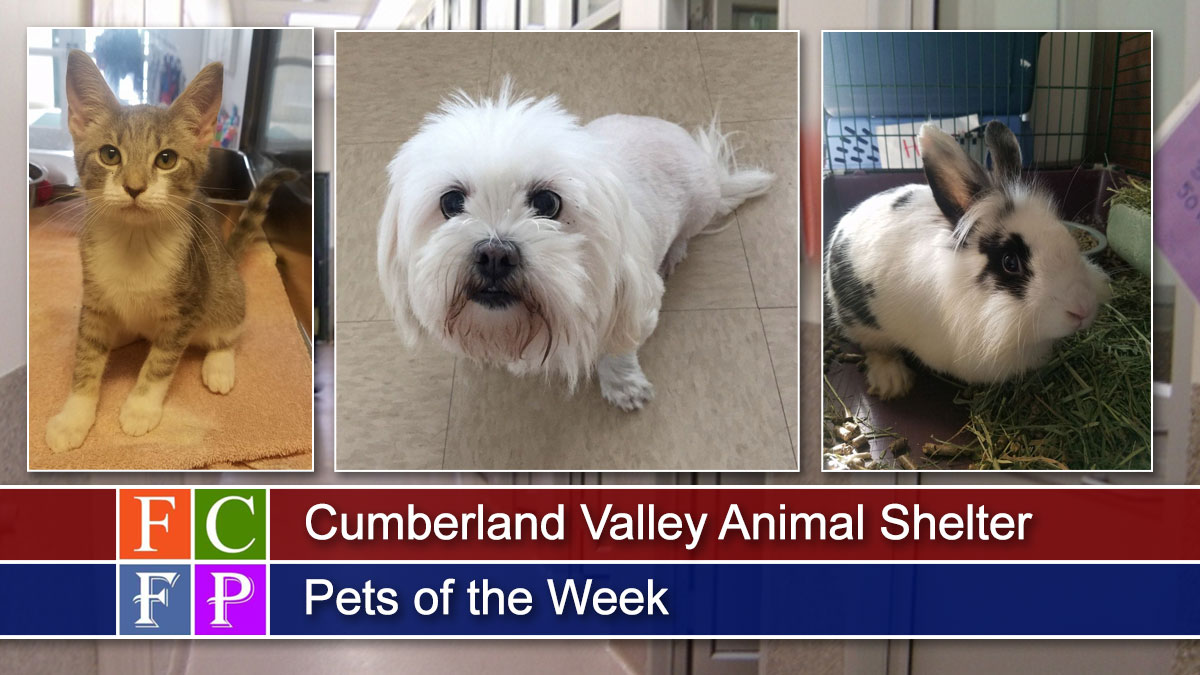 Cumberland Valley Animal Shelter Pets of the Week 8-10-2019