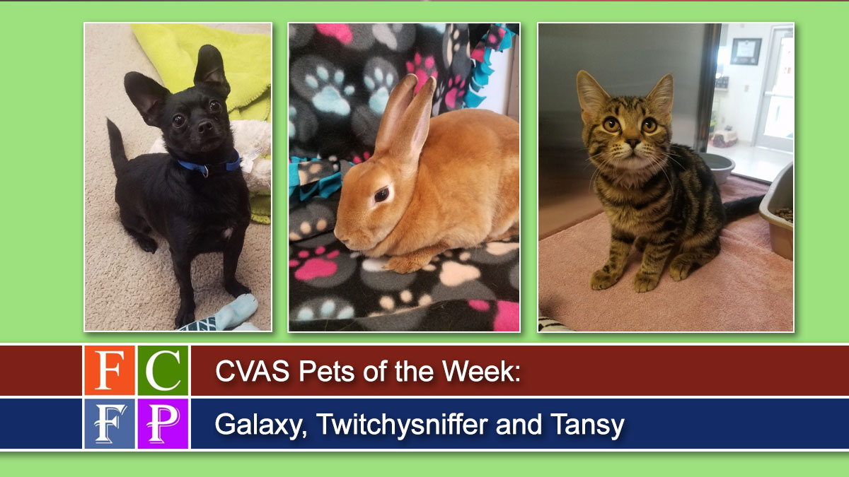CVAS Pets of the Week: Galaxy, Twitchysniffer and Tansy