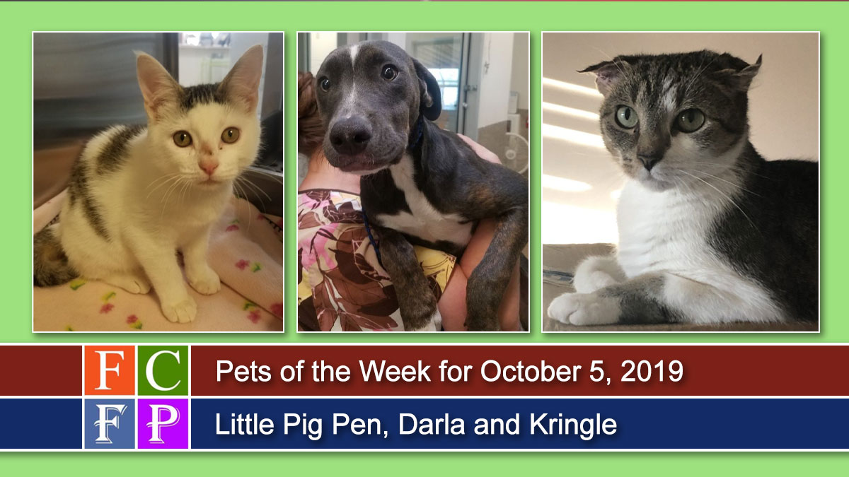 Pets of the Week: Little Pig Pen, Darla and Kringle