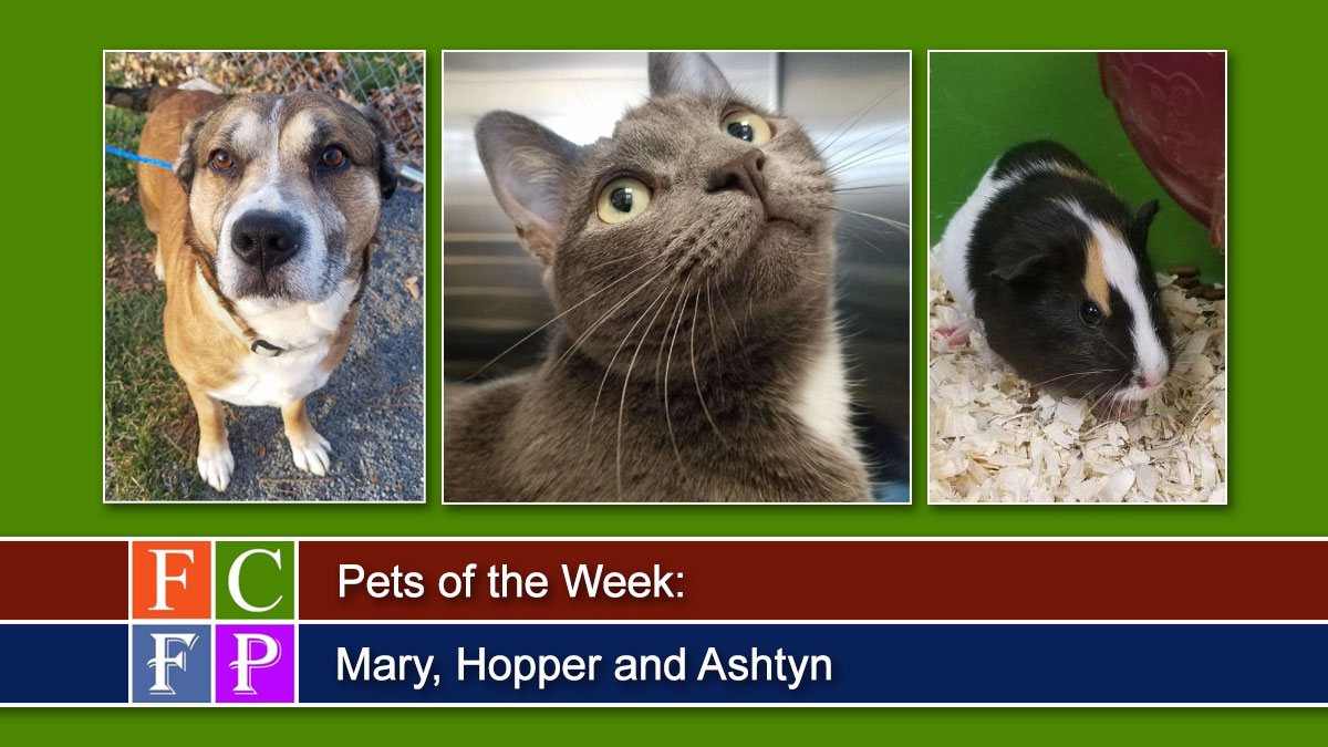 Pets of the Week: Mary, Hopper and Ashtyn