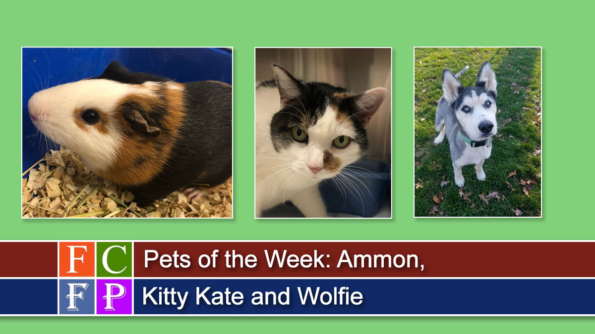 Pets of the Week: Ammon, Kitty Kate and Wolfie