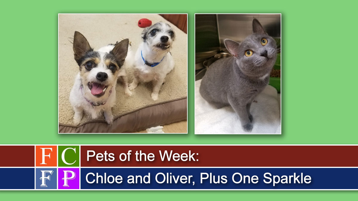 Pets of the Week: Chloe and Oliver, Plus One Sparkle