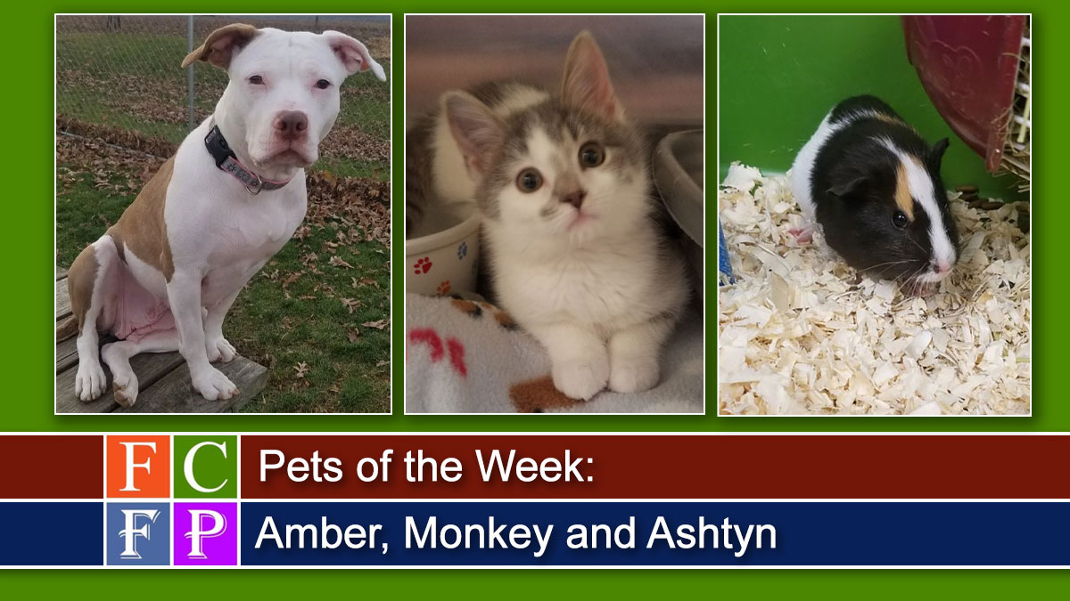 Pets of the Week: Amber, Monkey and Ashtyn