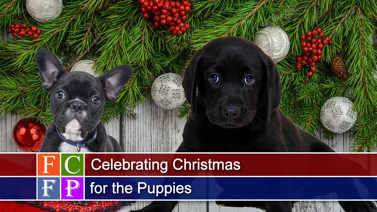 Celebrating Christmas for the Puppies