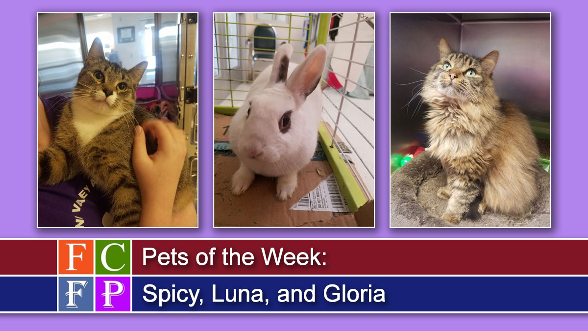 Pets of the Week: Spicy, Luna, and Gloria
