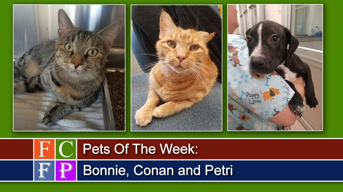 Pets Of The Week: Bonnie, Conan and Petri