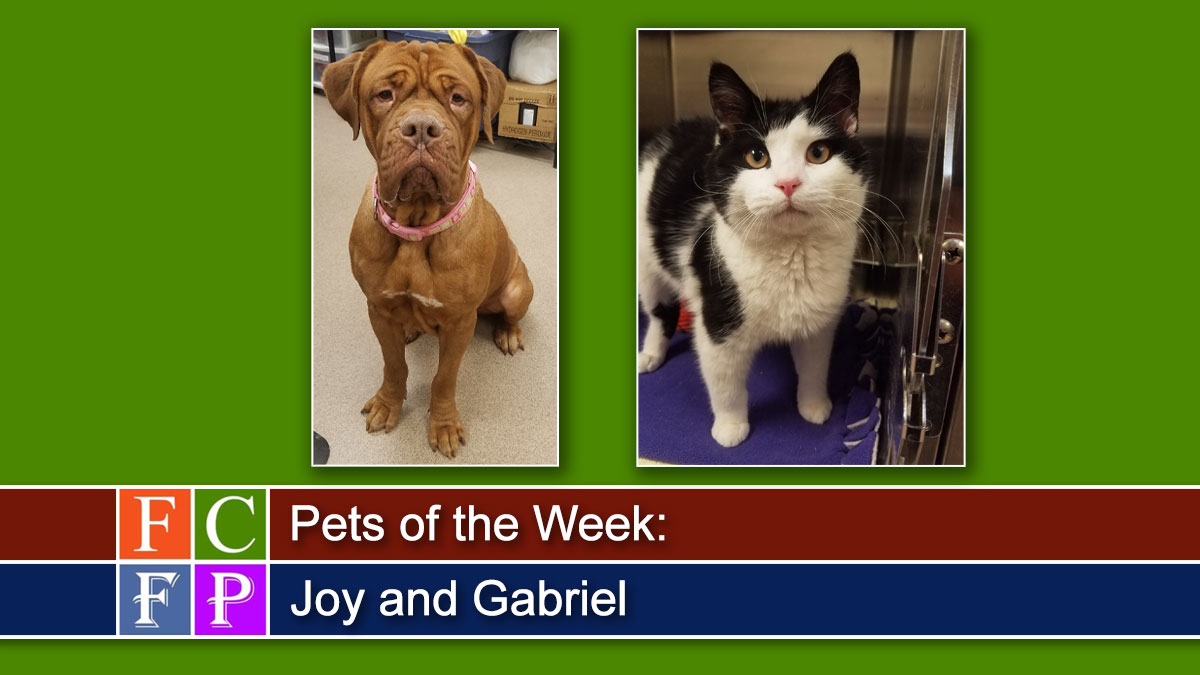 Pets of the Week: Joy and Gabriel