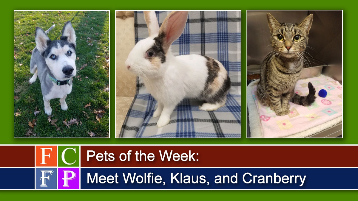 Pets of the Week: Meet Wolfie, Klaus, and Cranberry