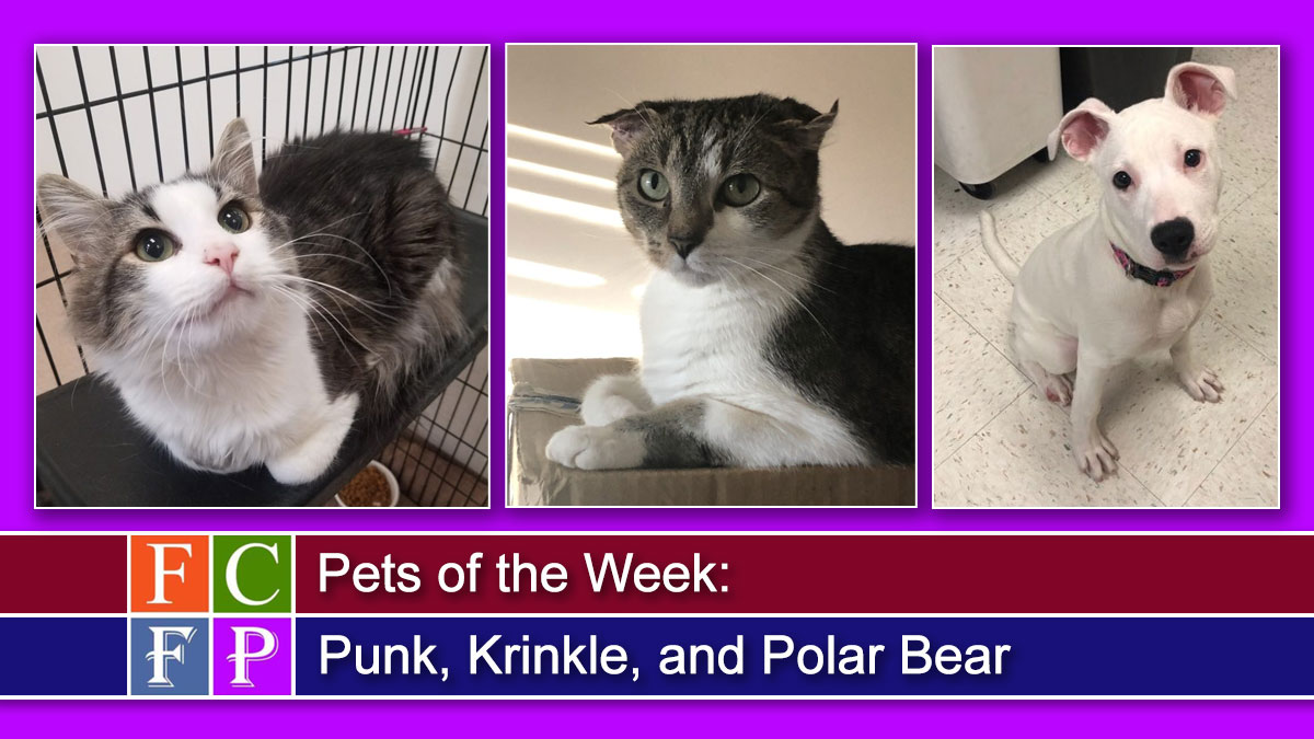 Pets of the Week: Punk, Krinkle, and Polar Bear