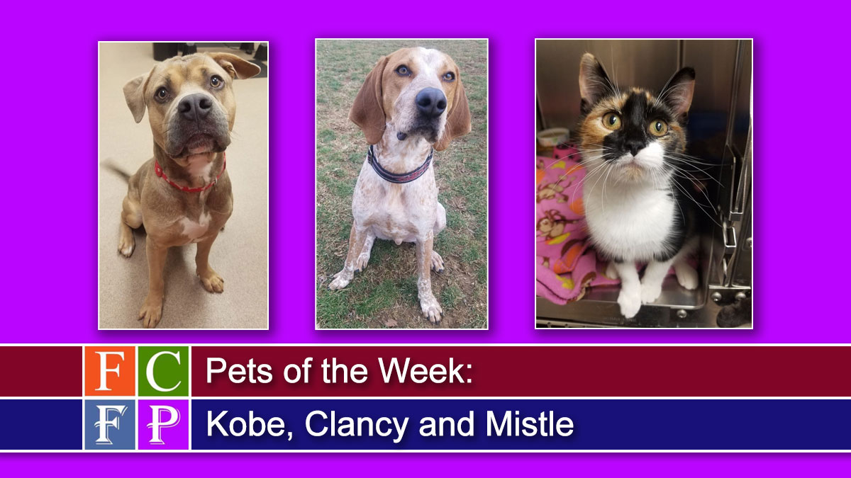 Pets of the Week: Kobe, Clancy and Mistle