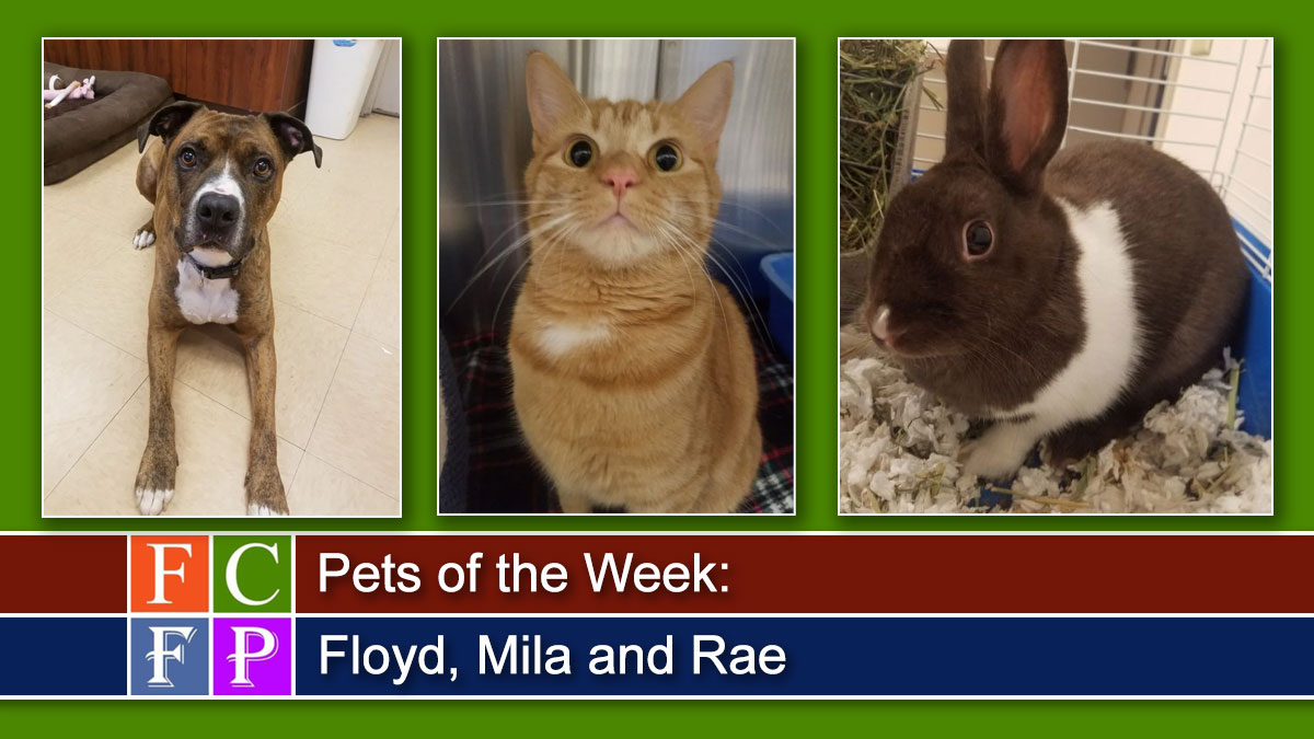 Pets of the Week: Floyd, Mila and Rae