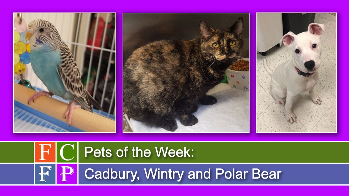 Pets of the Week: Cadbury, Wintry and Polar Bear
