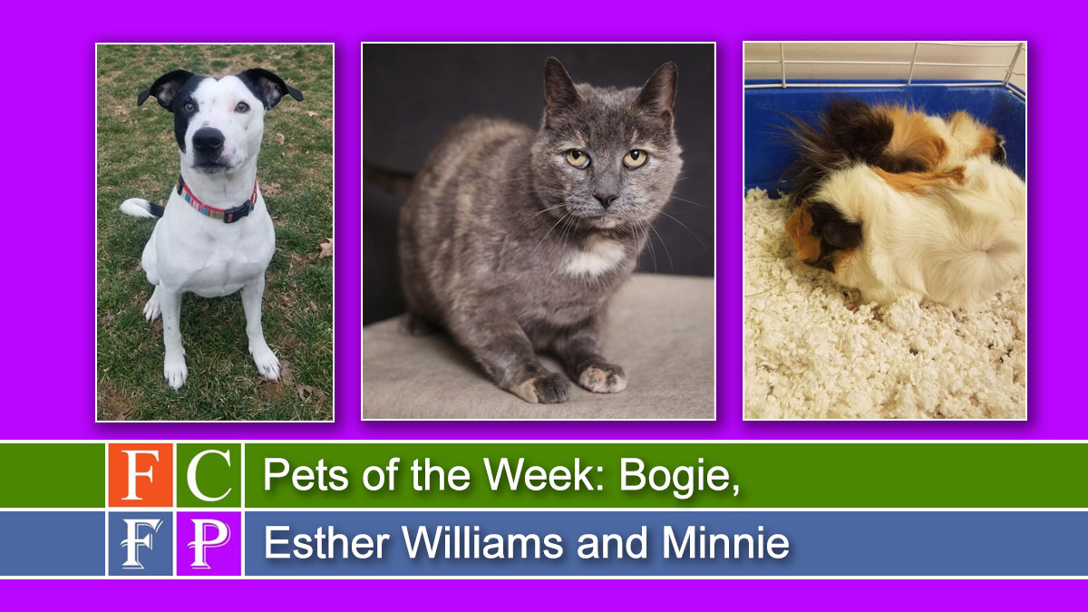 Pets of the Week: Bogie, Esther Williams and Minnie