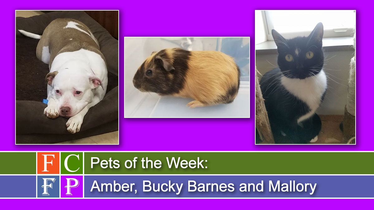 Pets of the Week: Amber, Bucky Barnes and Mallory