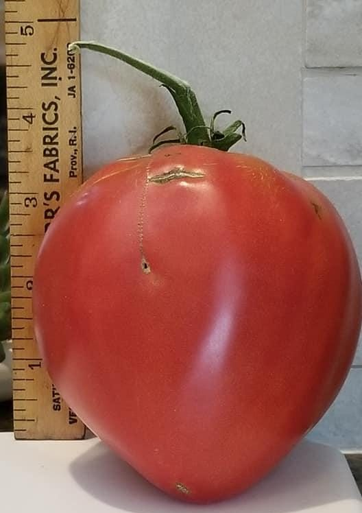 Make your tomatoes thrive